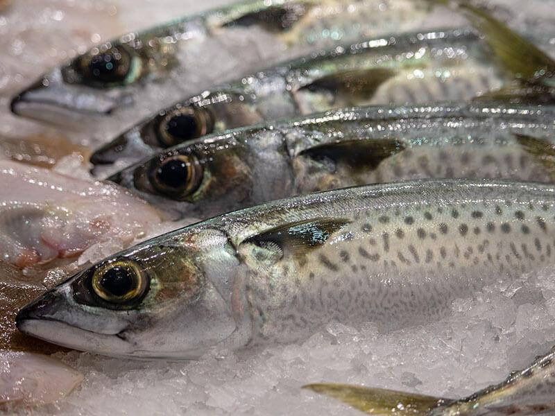 海鮮 | 台灣四季海鮮指南:如何在對的時間,吃對的海鮮?
