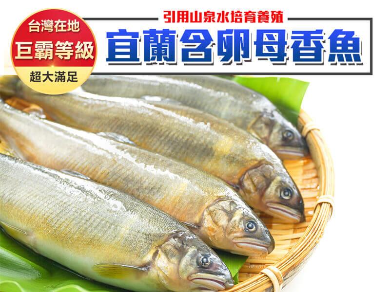 宜蘭含卵母香魚 6尾裝